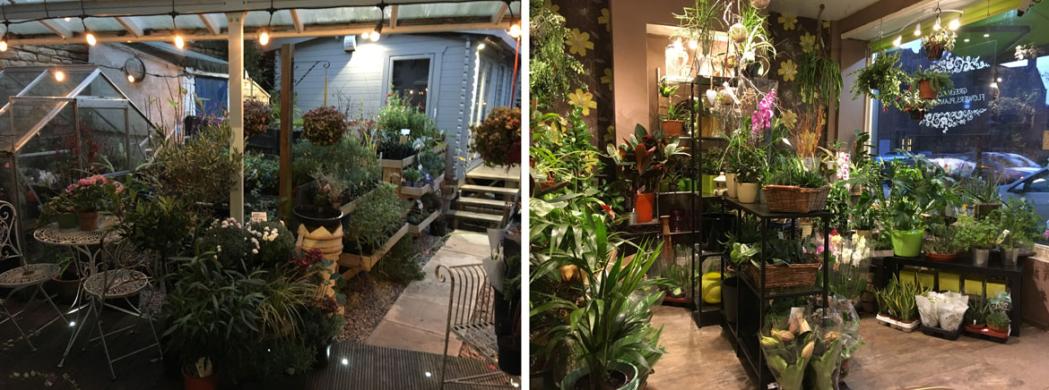 Outdoor Plants and House Plant Displays